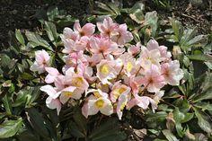Besuche den Beitrag für mehr Info. Garden, Flowers, Plants, Peach, Snow, Garten, Lawn And Garden, Flora, Gardening