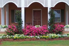 Plant Encore Azaleas along with other contrasting plants for an eye-catching landscape bed.