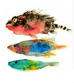 Phillipa Sinclair watercolour fish illustrations