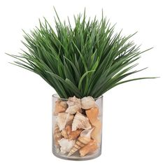 Bring a natural-inspired touch to your home with this faux beach grass arrangement, featuring shell accents and a glass vase.