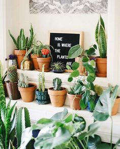 We couldn't agree more :@saratoufali #urbanjunglebloggers #homeiswheretheplantsare