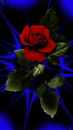 The perfect Rose Colorful Blink Animated GIF for your conversation. Discover and Share the best GIFs on Tenor. Beautiful Wallpaper For Phone, Beautiful Flowers Wallpapers, Beautiful Rose Flowers, Love Rose, Amazing Flowers, Purple Flowers, Red Roses, Beautiful Love Pictures, Beautiful Gif