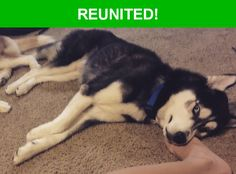 Great news! Happy to report that Max has been reunited and is now home safe and sound! :)