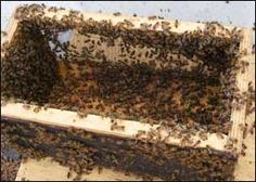 This is a picture of a transport hive with bees still in and on it