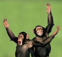 chimpanzee smiling - Google Search