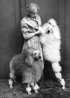 "Champion poodles ""Peaslake Storm"" (sitting), and  ""Peaslake Travellers Joy"" are seen with typical poodle trim at the Dog  Show which opens at Olympia.  (Photo by Keystone/Getty Images). 24th May  1949"