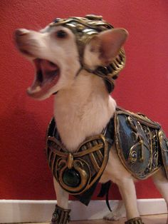 Warrior dog by Organic Armour    For more Styling animals check out our board-> http://www.pinterest.com/thevioletvixen/styling-animals/