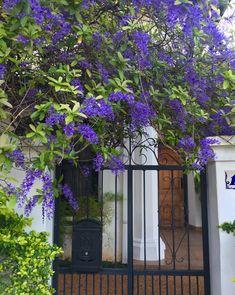 Gates And Railings, Plants, Home, Flowers, Plant, Planets
