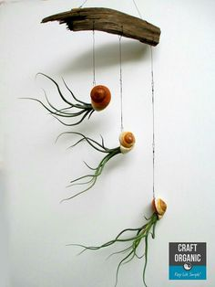 Air plants are so cool!