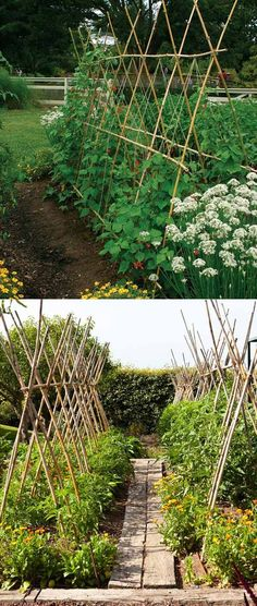 Thanks to Its Strong yet Light Weight, Bamboo Poles are Often Used to Build Garden Trellis That Perfect for Growing Cucumbers, Beans and Many Other Plants #diytrellis #gardening #gardeningtips