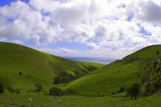 The green fields of the Fleurieu Peninsula, SA