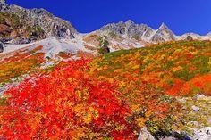 紅葉の涸沢とナナカマド Japan, Mountains, Photography, Travel, Beautiful, Autumn, Colors, Scenery, Fotografie