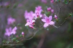 Beauty by JessVLpez http://ift.tt/1LahrJ8