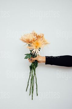 @Bloguettes Stock that Rocks! #flowers #fall #yellowflowers