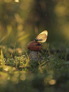 Nice to meet you.. : © Zhenya