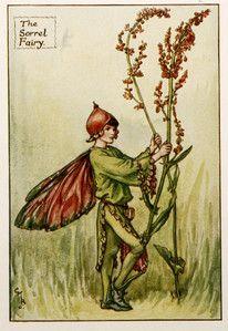 grape hyacinth - Google Search