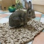 DIY Rabbit Toys & Enrichment, The Rabbit House