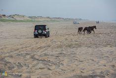 A Jeep stops for the wild horses in Carova. North Carolina Vacations, Camping In North Carolina, Outer Banks North Carolina, North Carolina Homes, Corolla Outer Banks, Vacation Wishes, Dream Vacations, Vacation Spots, Duck Nc