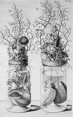 Specimen Jar Illustration circa 1710 of Frederik Ruysch from Thesaurus animalium Art And Illustration, Arte Popular, Vanitas, Memento Mori, Macabre, Natural History, Printmaking, Collages, Art Drawings