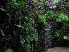 Tropical plants won't mind a little extra water from this outdoor shower. Indoor Outdoor Bathroom, Outdoor Baths, Outdoor Rooms, Outdoor Showers, Outdoor Living, Outdoor Decor, Tropical Garden, Tropical Plants, Rock Wall Gardens