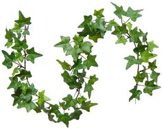 Image detail for -Banging the Drum: The Holly and the Ivy - and Mistletoe too...