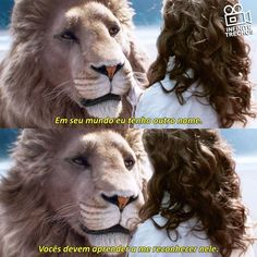 Narnia Movies, Narnia 3, Cs Lewis, Harry Potter, Movies Showing, Movies And Tv Shows, Citations Film, Chronicles Of Narnia, The Avengers
