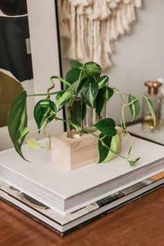 DIY Wood and Glass Propagation Station (and Tips for Growing)   Hunker Golden Pothos, Best Indoor Plants, Indoor Garden, New Roots, Plant Cuttings, Garden Soil, Gardening, Foliage Plants, Plant Species