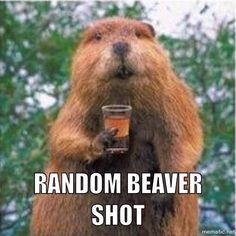 Random Beaver Shot****************yep, that's it in a nutshell.