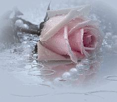 Beautiful colorful pictures and Gifs: Flowers-Rosas-Flores-Pictures