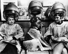 Dog Sitting Under Dryer in Beauty Salon-John Drysdale Dog Salon, Grooming Salon, Pet Grooming, Vintage Hair Salons, Salon Style, Vintage Dog, Vintage Hairstyles, Dog Photos, Vintage Beauty