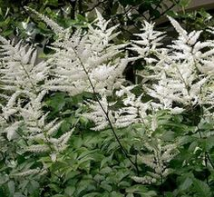 When the sun sets, pale blooms shine - A List of Plants for a Moon Garden