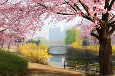 """""""Spring Morning"""" by Woon Shin on 500px ~  This photograph was taken at Ilsan, South Korea."""