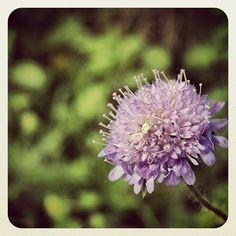 hidden legs #photography #nature #flowers #whphideandseek #instagood #statigram