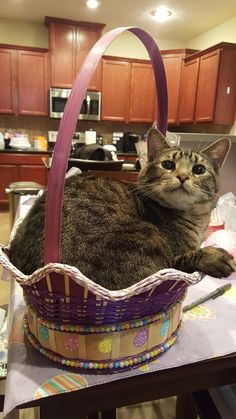 Hello my name is Ferdinand and I approve this basket.   http://ift.tt/23rlHw4 via /r/cats http://ift.tt/1SvZDoN  cats funny pictures