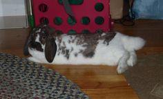 Ellie #rabbit #rescue #bunnies #adoptdontshop