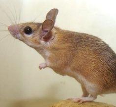 How To Keep Mice Away Home Remedies