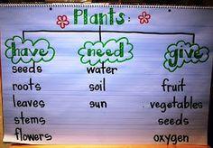 Plant Week, books, activities, hands on