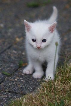 ^White kitty