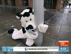 The Cash Cow was out a little too late with Kochie last night.