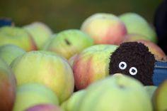 Erwin und die Apfelernte.