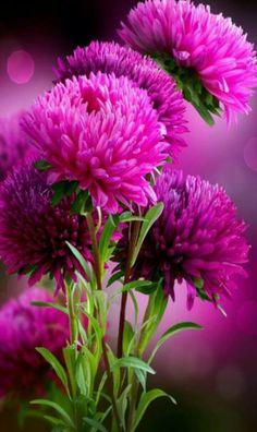 Beautiful flowers/ Encyclopedia of Plants/ Forum of gardeners Exotic Flowers, Amazing Flowers, My Flower, Pretty Flowers, Flower Power, Pink Flowers, Beautiful Images Of Flowers, Autumn Flowers, Beautiful Gorgeous