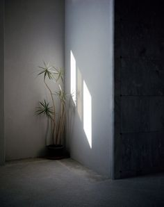 Michał Grochowiak, Flower, Hollywood, Forever, Cementary, Los Angeles, z serii Water & Gas, 2012, fot. dzięki uprzejmości artysty - photo 5
