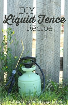 Homemade liquid fence recipe to keep the rabbits from mowing down veggies!