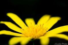 luziophoto.com