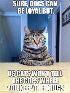 Need a Laugh? These Animal Memes Should Do the Trick! - Funny Animal Quotes - - This one makes me laugh sooooooo hard. Every time. The post Need a Laugh? These Animal Memes Should Do the Trick! appeared first on Gag Dad. Funny Animal Quotes, Animal Jokes, Cute Funny Animals, Cute Cats, Funniest Animals, Adorable Kittens, Funny Sayings, Funny Cat Memes, Funny Cats