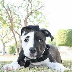 Why does this dog look French to me??  I think his name must be Pierre...