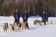 Husky safari Erasusi in Kuusamo, Ruka - absolutely worth trying. Photo by Mirja Pyysiäinen