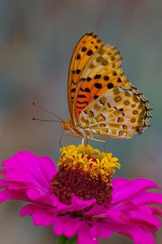 ~~butterfly on flower by natsuki90~~
