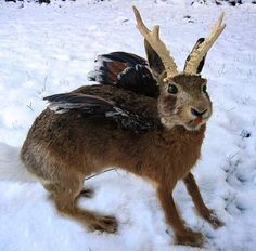 The Wolpertinger in the Bavarian forests in Germany