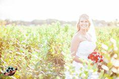 Walking through blueberry fields! Love the bright sun in this!   #makeyourweddingrad #weddingphoto #weddingphotography #tampaweddingphotographer #tampaphotographer #floridawedding #radred #brideportraits #bridalportraits #bride #tampaweddingphoto #tampaweddingphotography #wppi #ppa